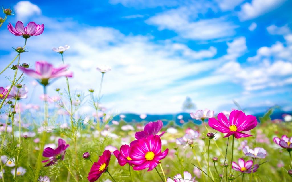 Фото красивой природы и цветов на рабочий стол 366